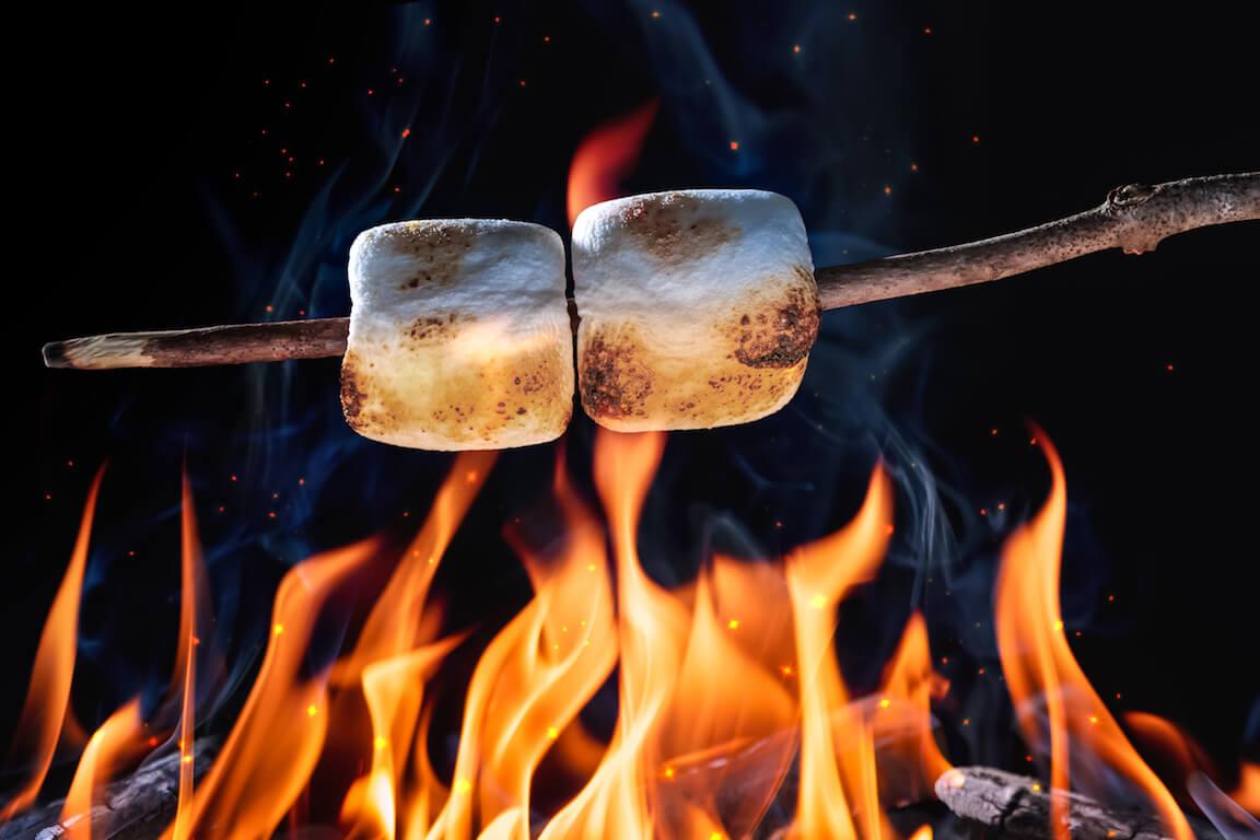 Guimauves sur une branche grillant au-dessus d'un feu de camp